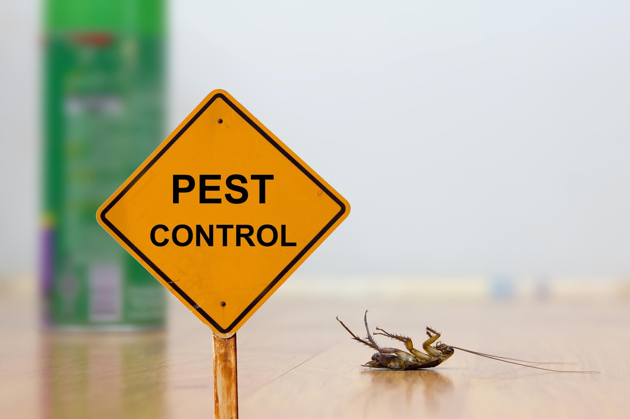 Do you know the importance of pest control for your restaurant? | Total Pest Elimimnation