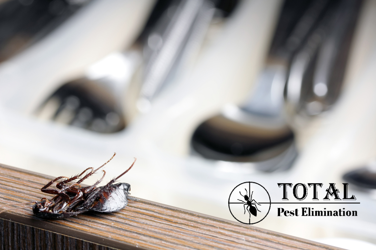 Why is pest control necessary for restaurants | Totalpestelimination