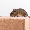 Eliminate the chances of food contamination with pest control