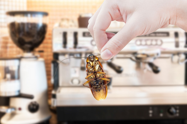 Pests are a threat to your restaurant | TotalPestElimination