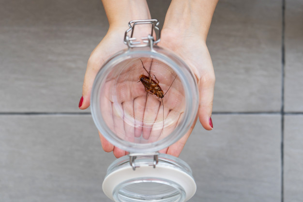 Create a sterile and nurturing environment by eliminating pests!